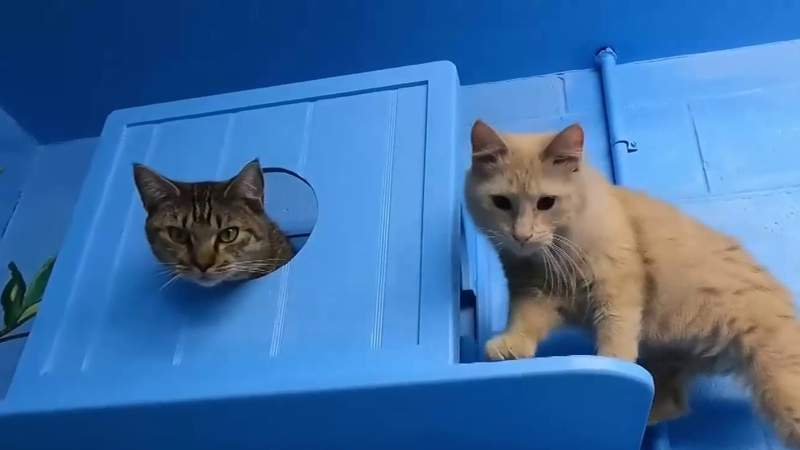Pick Of The Litter: Bagel and Charlie