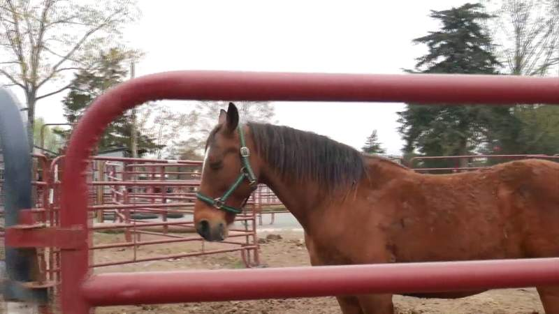 Bringing broken spirits back to life: Local rescue overcomes the odds to save horses in need