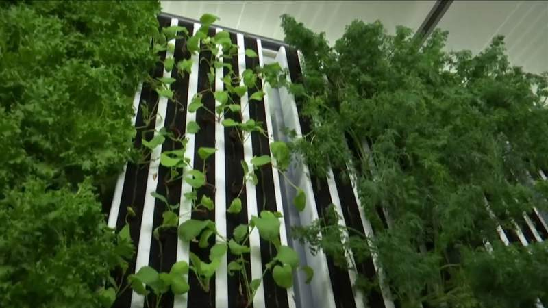 New Moneta farm redefines method of growing fresh produce