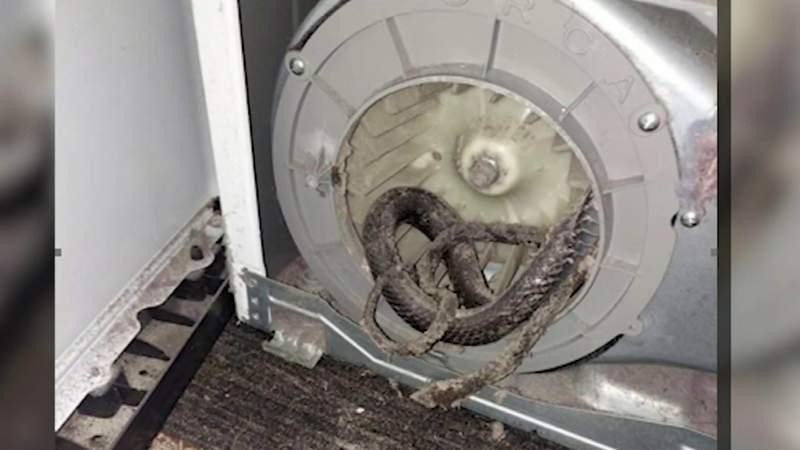 Florida family finds snake snarled up in dryer