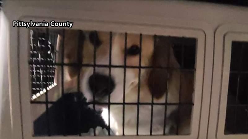 Special rescue for Pittsylvania Pet Center