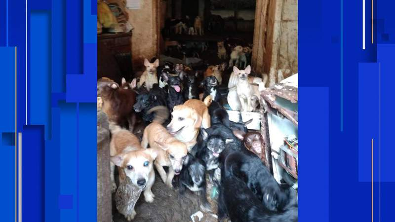 Hundreds of animals rescued in rural Tennessee hoarding case
