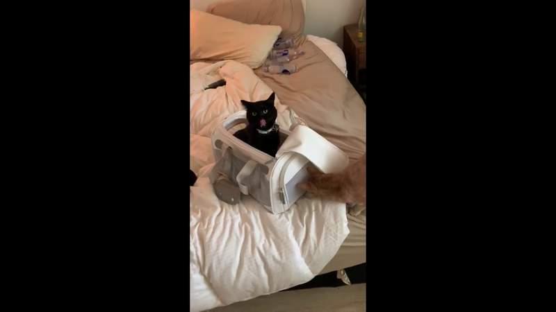 Dennis Quaid (the cat) meets his new companion