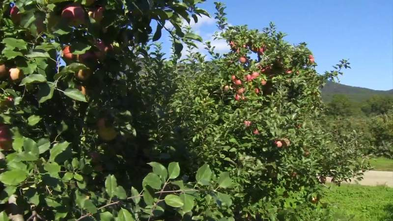 Lynchburg invites families on apple picking trip this weekend