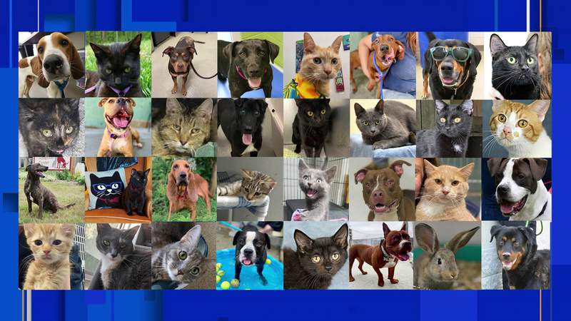 Month-long push to find pets a home comes to an end