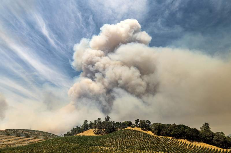 A plume rises over a vineyard in unincorporated Napa County as the Hennessey Fire burns on Tuesday, Aug. 18, 2020. Fire crews across the region scrambled to contain dozens of blazes sparked by lightning strikes as a statewide heat wave continues. (AP Photo/Noah Berger)