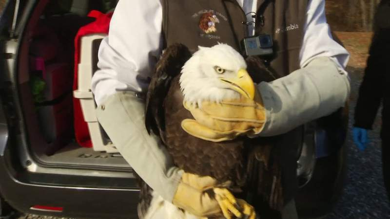 2020 started with a bang for a bald eagle