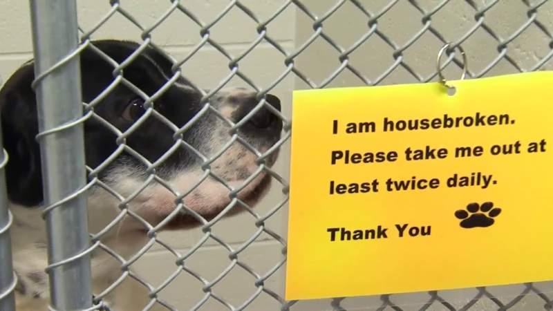 Roanoke animal shelter at max capacity