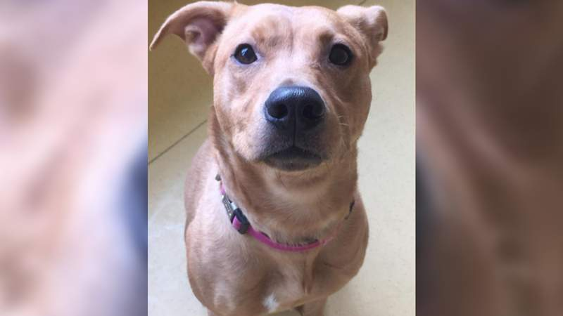After more than two years at the Lynchburg Humane Society, Luna is certainly ready for her forever home.