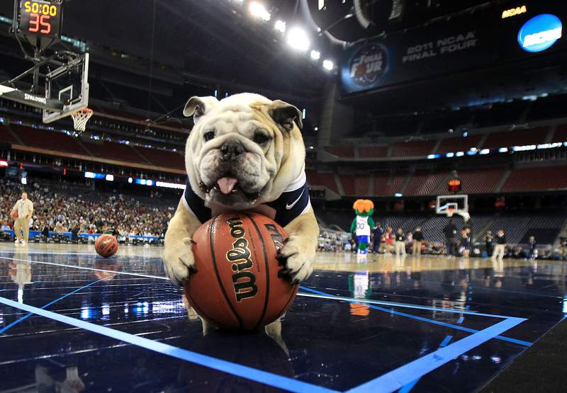 Butler Bulldogs mascot Blue II on the court as Butler practices prior to the 2011 Final Four.
