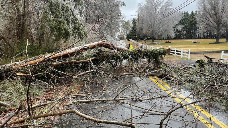Tree down in Danville