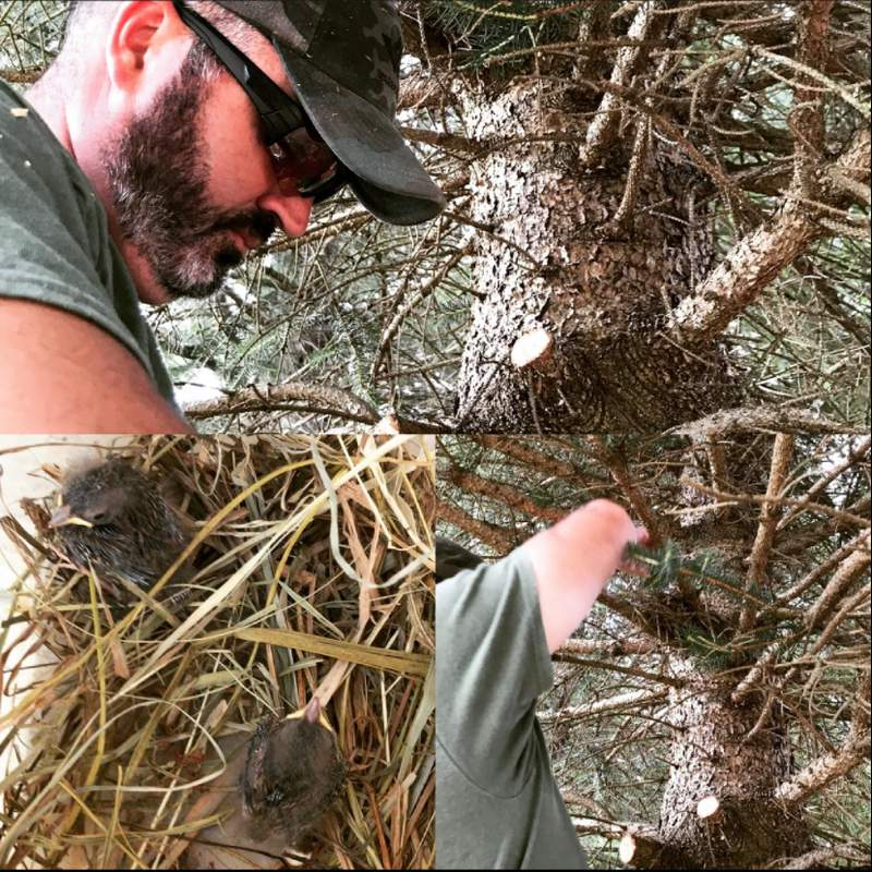 A nest of baby birds was rescued in Christiansburg.