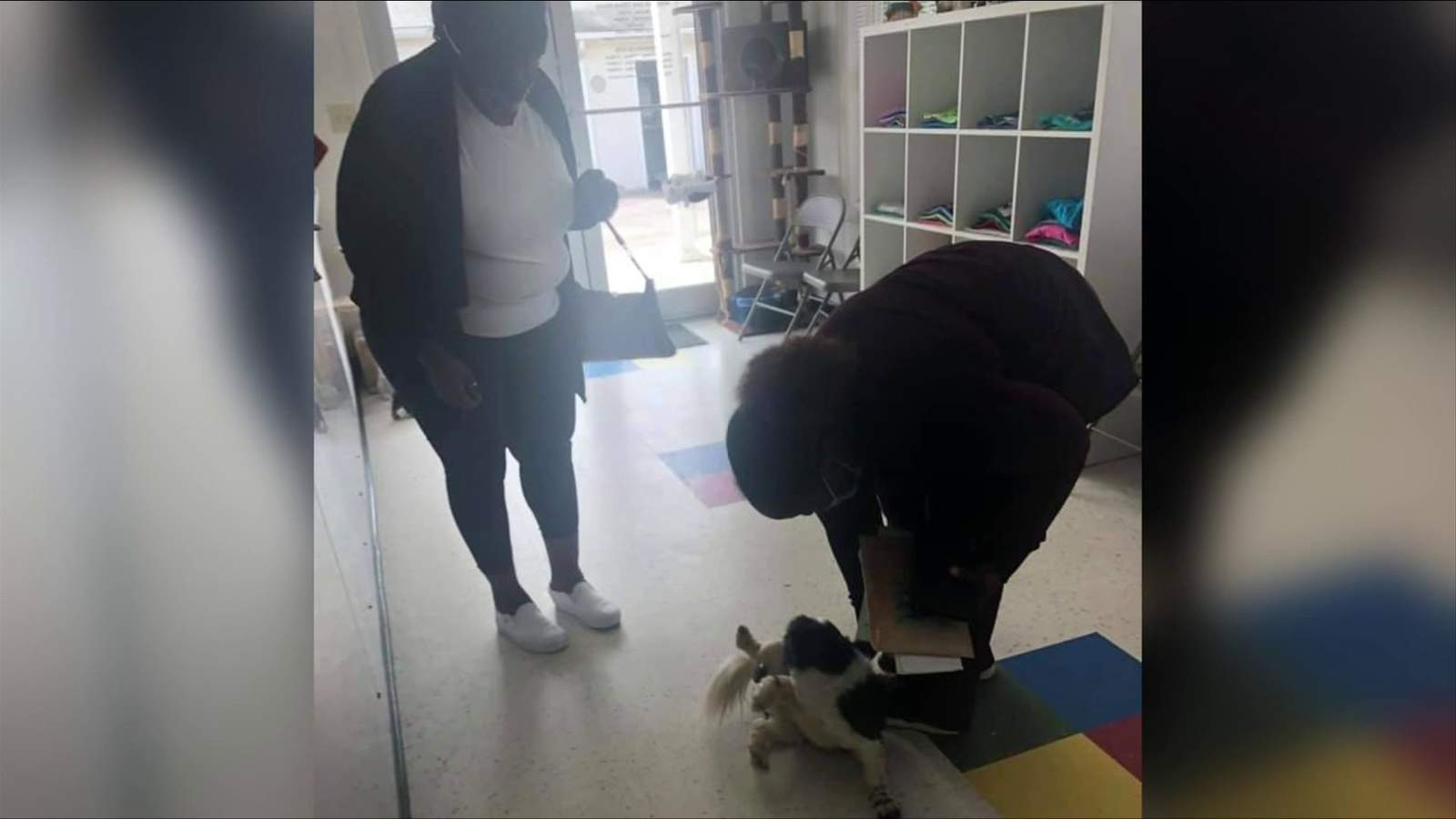 Missing dog found in Danville reunited with owner from New Jersey