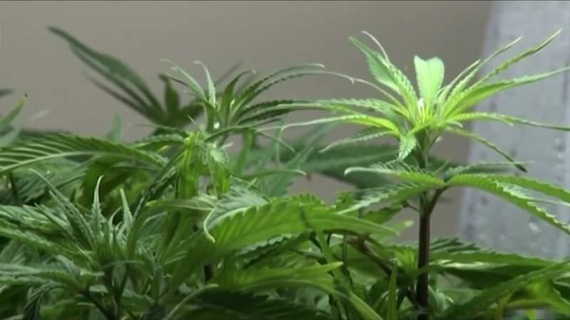 JLARC recommends changes to marijuana legalization