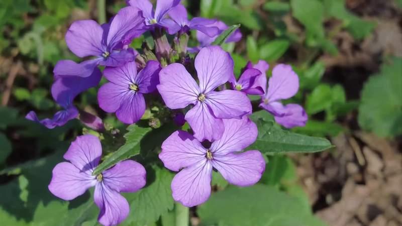Explore Mill Mountains wildflower garden