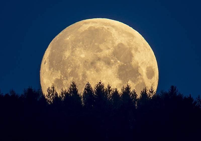 The full moon sets behind trees in the Taunus region near Frankfurt, Germany, Thursday, May 7, 2020. (AP Photo/Michael Probst)