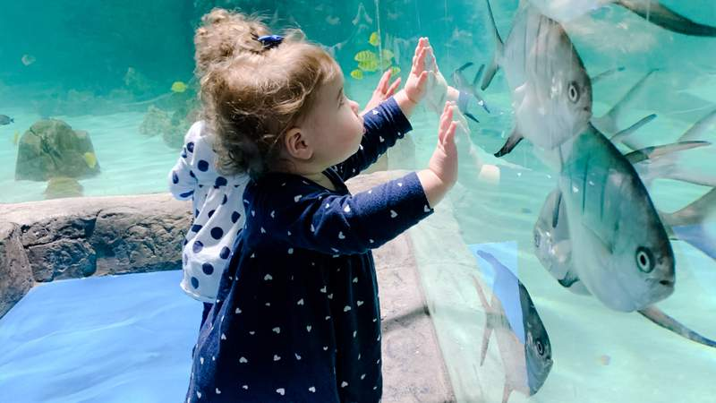 SeaQuest officials say they host people of all ages -- no matter how young or old.