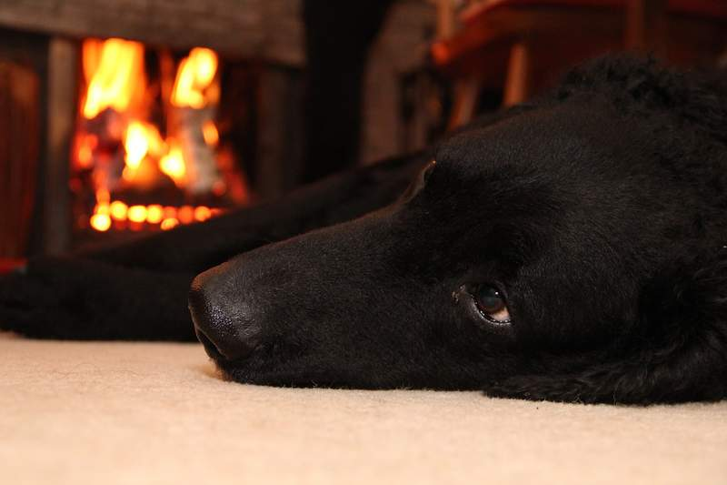 A dog lays on the floor in front of a fire.