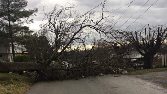 A downed tree on Murray Street in Christiansburg Credit: Jessica Nester