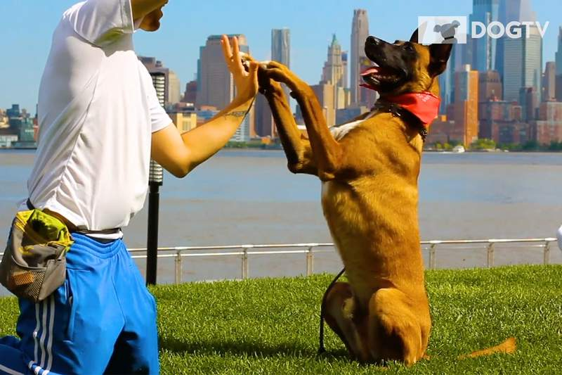 DOG TV has patented programs designed especially for your dog's visual and auditory senses.