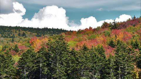 Beyond The Forecast: When and why the leaves will change colors this fall